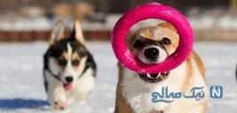 دیدنی های جذاب روز – دوشنبه ۲۹ بهمن! از محله فقیر کاراکاس تا جشنواره آیینی لوشن
