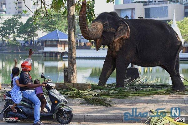 دیدنی های جذاب روز – پنجشنبه 2 اسفند! از معبدی در بانکوک تا انتخابات در سنگال