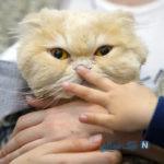 دیدنی های جذاب روز – دوشنبه ۲۶ فروردین! از کشف گور دستهجمعی کردها تا نمایشگاه حیوانات خانگی