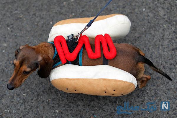 دیدنی های جذاب روز – دوشنبه ۲۹ مهر! از جشن هالوینی سگهای خانگی تا مسابقه شتر سواری