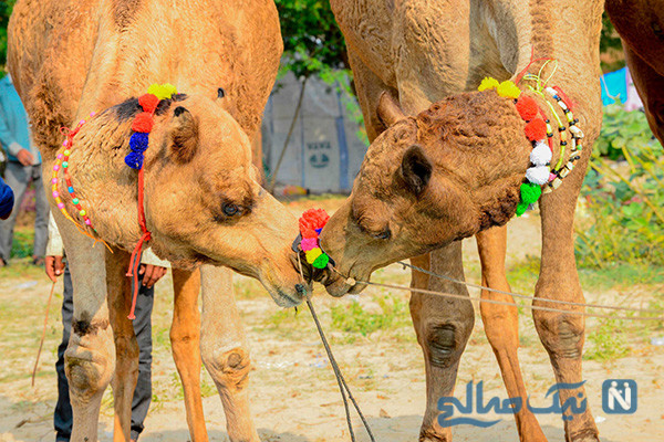 دیدنی های جذاب روز – چهارشنبه ۲۲ آبان! از نمایشگاه خودرو دوبی تا معدن الماس آفریقا