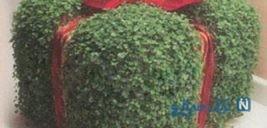آموزش سبزه سفره هفت سین بصورت جعبه کادو!