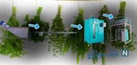 خط تولید سبزی بهفر ماشین البرز