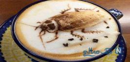 عکس های خنده دار از قهوه چینی تا تتلوی شترها سری ۶۷۹