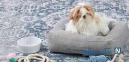 نکاتی که قبل از آوردن سگها درباره نگهداری از حیوانات خانگی باید بدانید