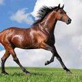 مردی که به اسبها سواری میدهد