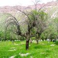معمای کاشت درخت
