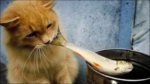 تست هوش ماهی ها و گربه