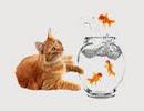 تست هوش جالب ماهی شماره ۲ در چندمین دور خورده می شود؟