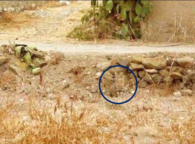 تست هوش : اگه تونستی گربه را پیدا کنی؟