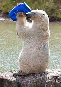 معمای المپیادی خرس قطبی ، هوش خود را بسنجید