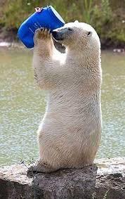 معمای المپیادی خرس قطبی