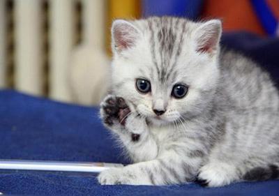 ضرب المثل مژدگانی که گربه ما عابد شد