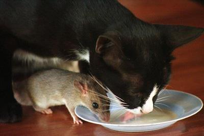 گربه و موش با هم ساختند ، وای به حال بقال