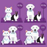 تست هوش وزن سگ و گربه و خرگوش