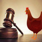 ضرب المثل شده حکایت روباه و مرغهای قاضی