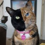 گربه هایی که طرحهای جالب و منحصر به فرد برروی بدن خود دارند!