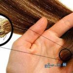 ماسک هایی مفید برای تقویت مو و پیشگیری از موخوره