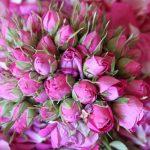 گل سرخ و فایده های بی نظیری که برای سلامت پوست دارد!