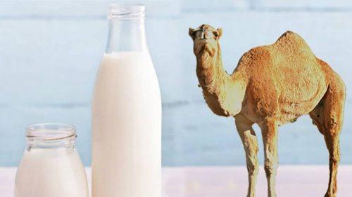 شیر شتر برای پوست